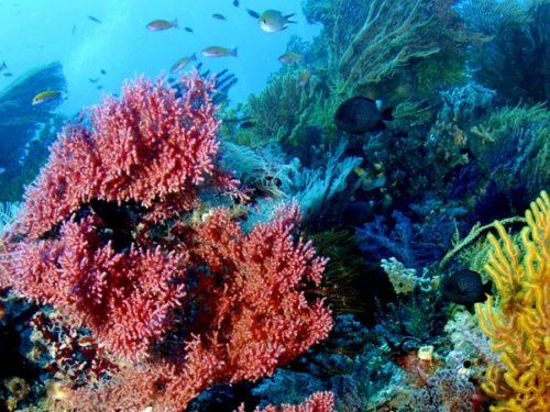 Raja Ampat wide angle underwater