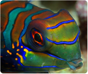 A Mandarin Fish in the Philippines