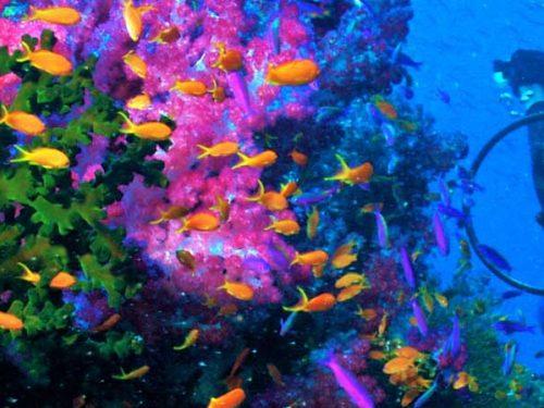 Fiji's Soft Coral Dive