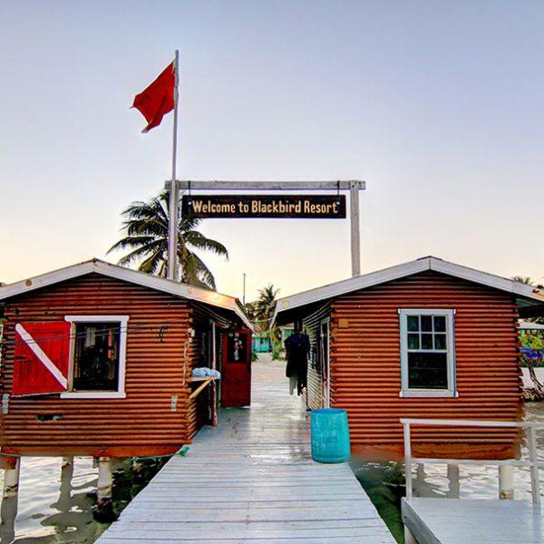 Dive Shop Pier Blackbird Caye Resort