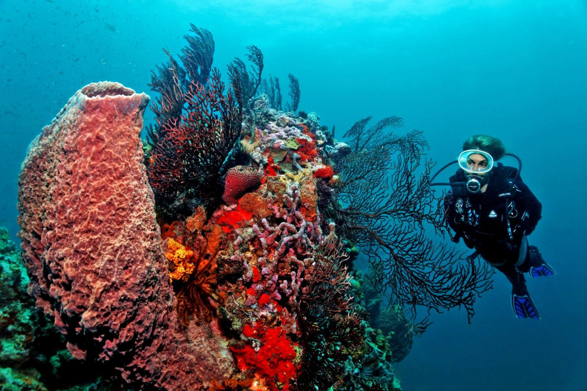 Diving St Lucia at Anse Chastanet