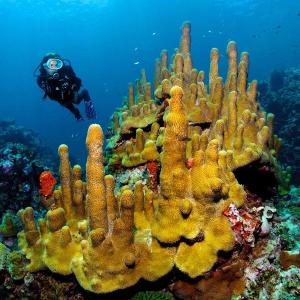 Diving St. Lucia at Anse Chastanet