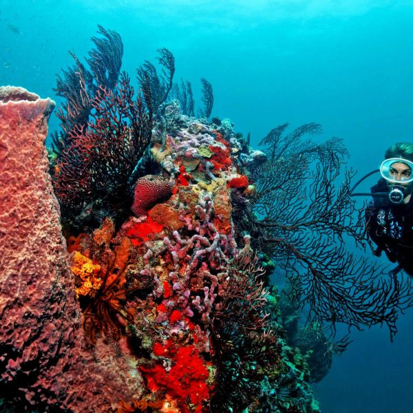 Scuba St. Lucia at Anse Chastanet