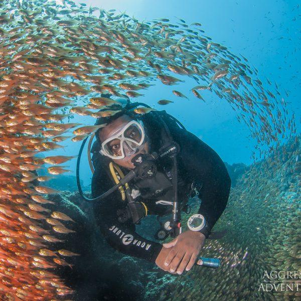 Oman Aggressor - Underwater