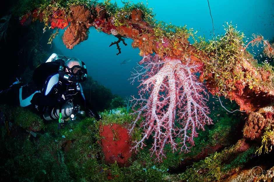Beautiful Corals on the wrecks in Truk Lagoon - image courtesy of Blue Lagoon Resort