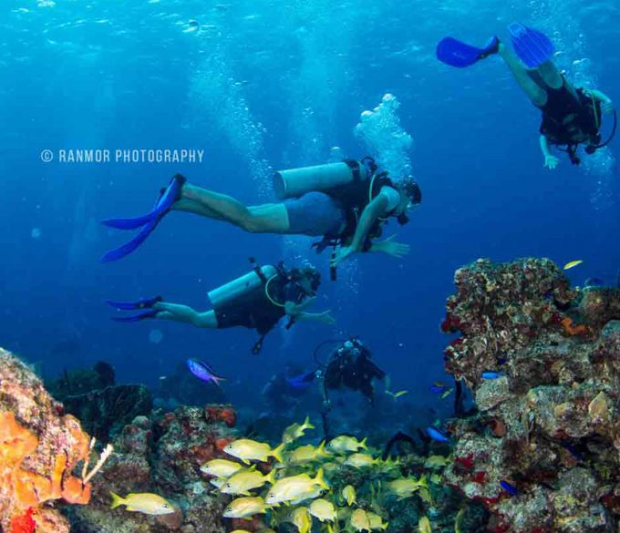 Cozumel Mexico Diving Destination