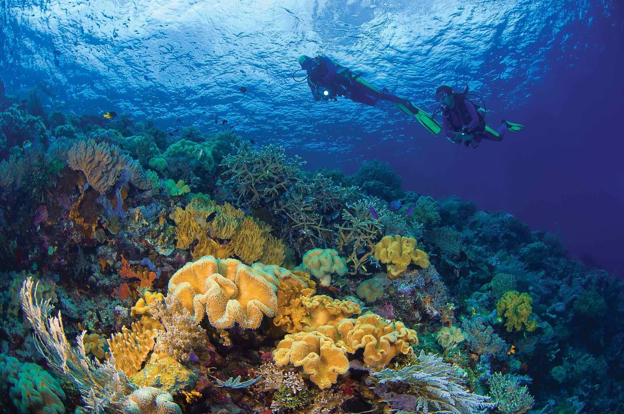 Top 6 Indonesia Scuba Diving Locations - Fly & Sea Dive Adventures