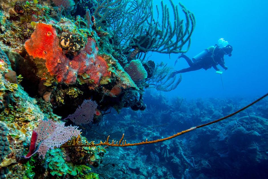 scuba02-940web