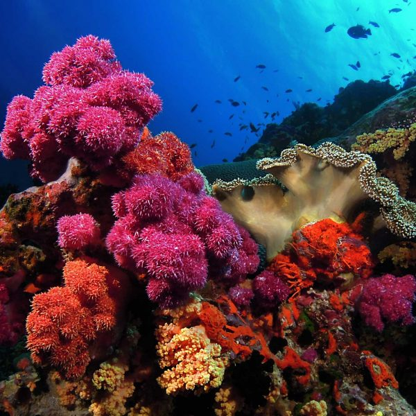 VoliVoli Fiji Underwater