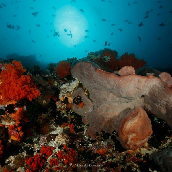 Indonesia Diving Reef