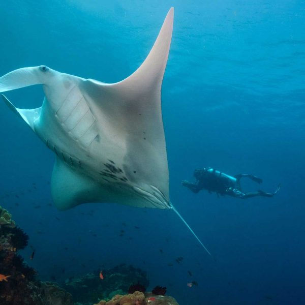 Raja Ampat Diving Manta