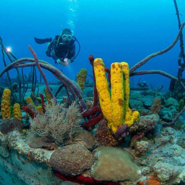 Grand Cayman Nicholson wreck