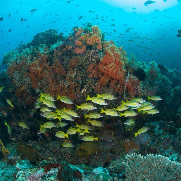 Coral Garden Bangka