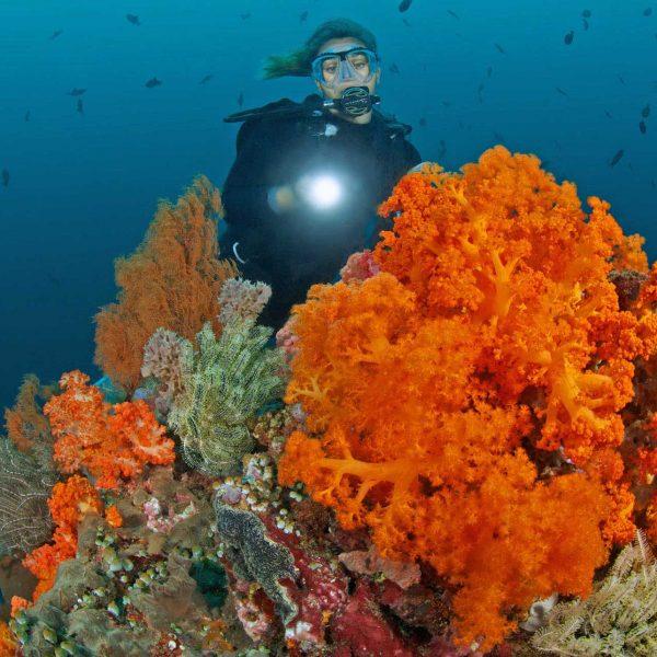 Soft Coral at Murex Bangka