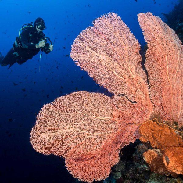 Bunaken diver fan