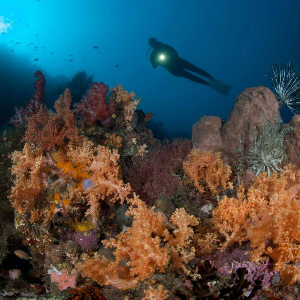 Manado diving